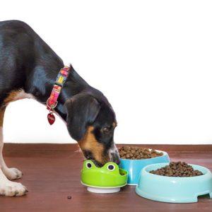 Dry Kibble for Dogs