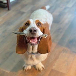 Bones & Chews for Dogs