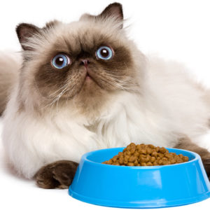 Dry Kibble for Cats